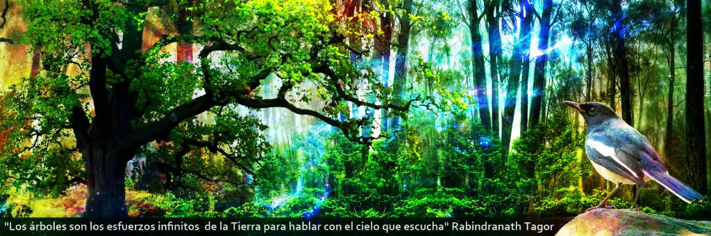 La belleza de la Madre tierra y su lenguaje